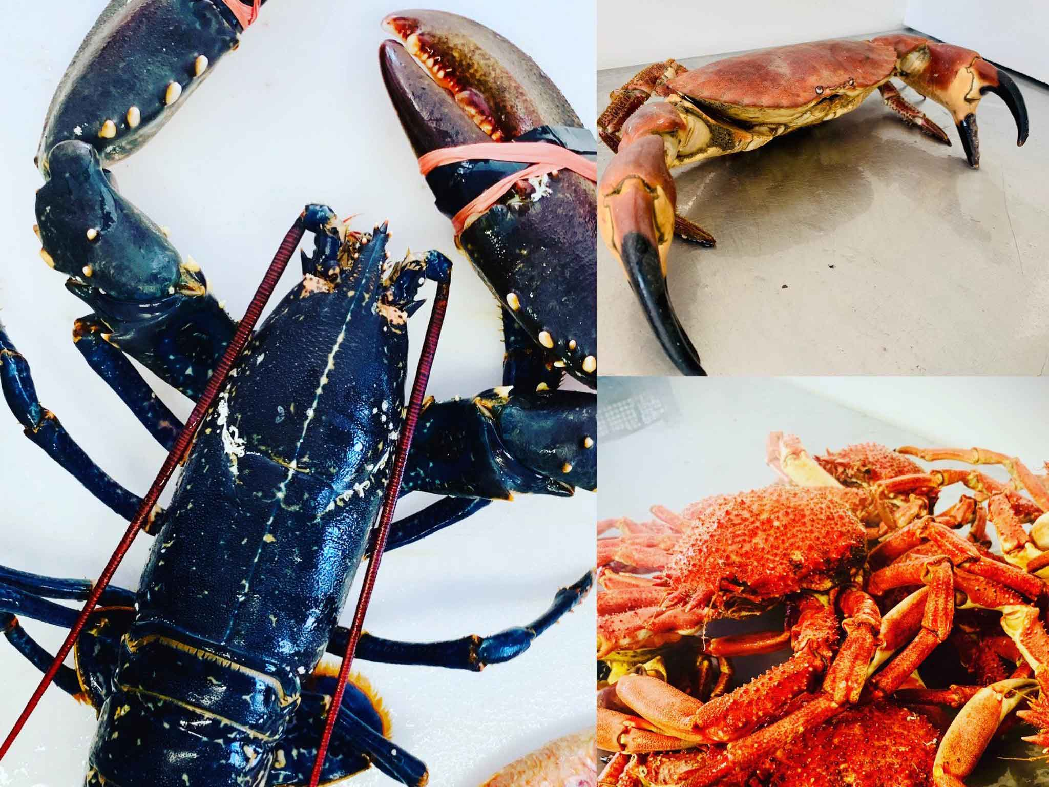 Fresh Cornish Lobster and Crab