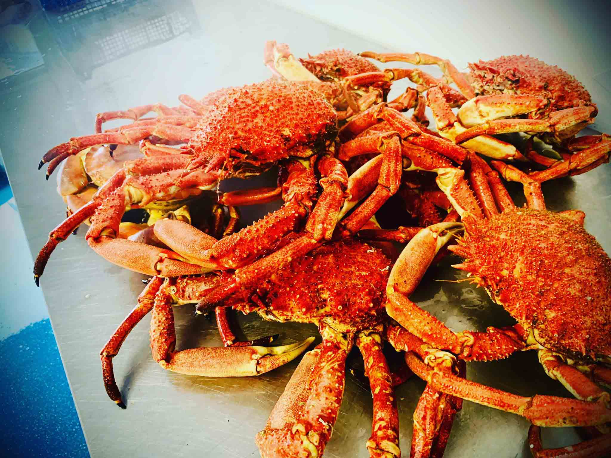 Fresh Cornish Crab