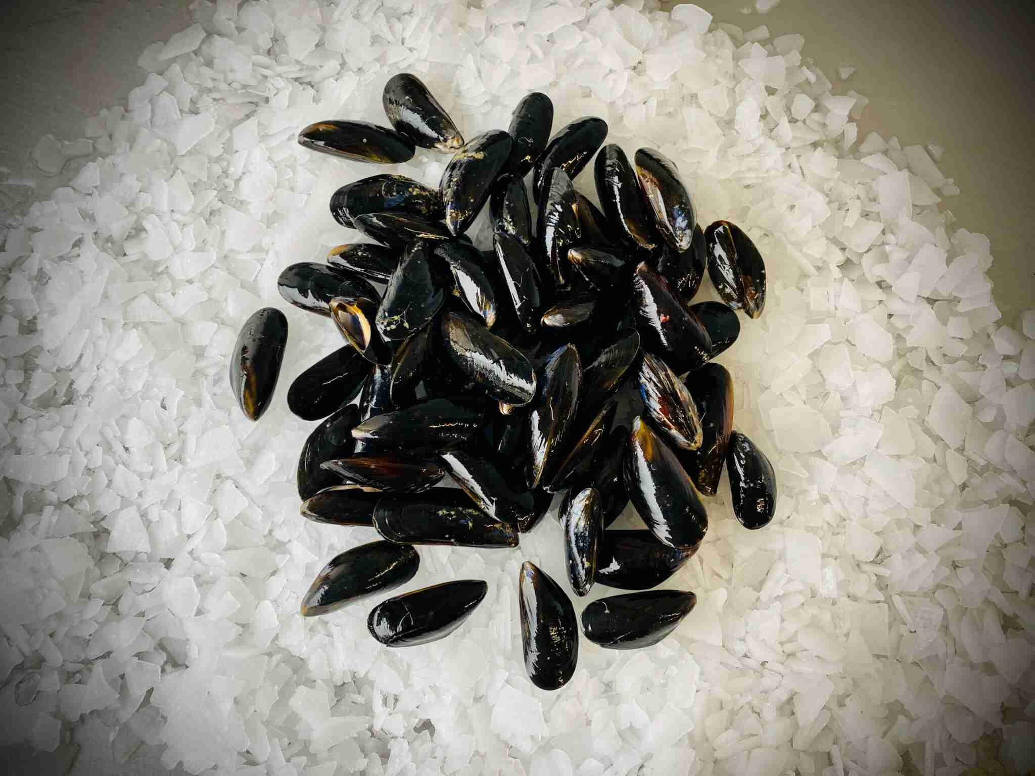 Live St.austel Bay Cornish Mussels